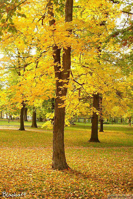 Park Waryńskiego