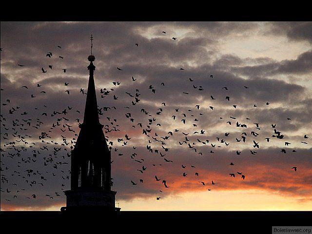 ...ptaki...