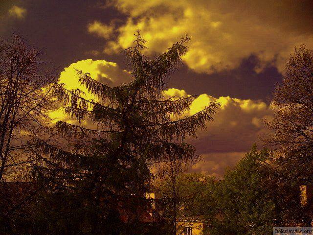 Drzewo uciekające przed chmurą