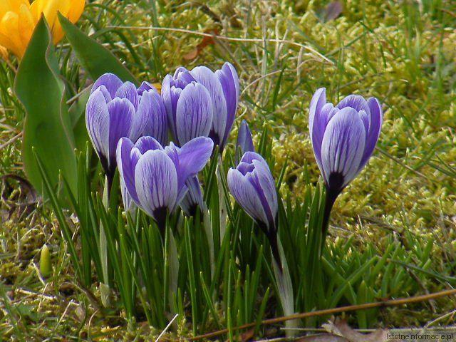 Wiosna wiosna ach to ty