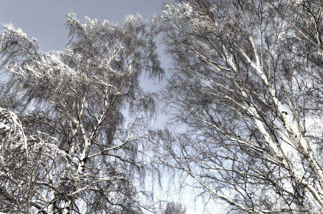 Drzewa z-index: 0