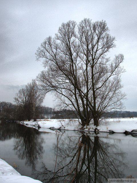 Drzewo nad Kwisą z-index: 0