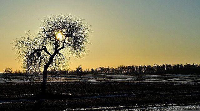 Drzewo zaklęte w słońcu