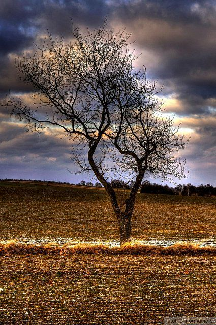 Drzewo z-index: 0