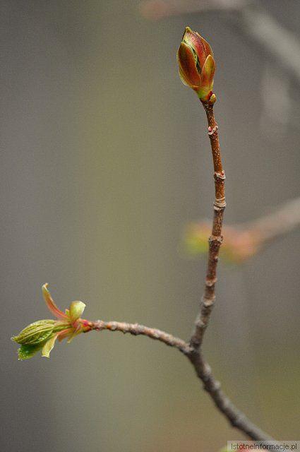 początki wiosny