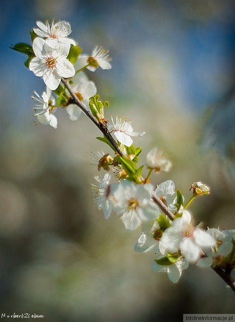 I jak tu nie kochać wiosny ;-)