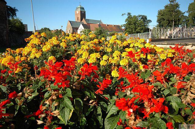 kościół Mariacki w kwiatach
