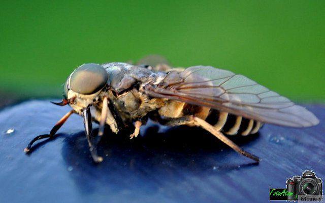 tajemniczy insekt to było wielkie (jak szerszeń) nie wiem co to