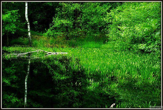 Uroki  lasów