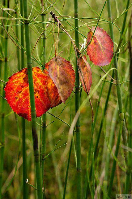 w kolorach wczesnej jesieni z-index: 0