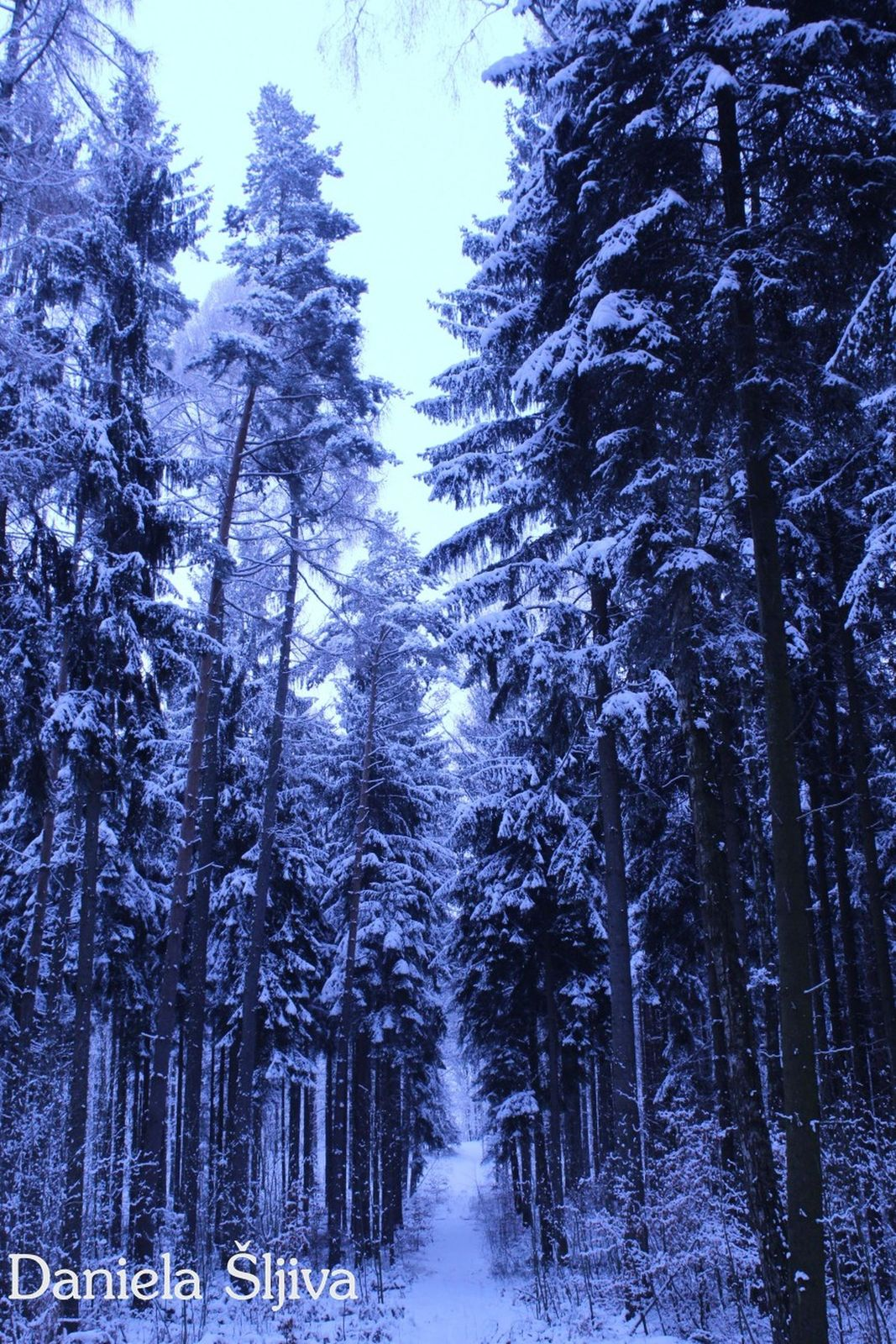 Zima w lesie w Wartowicach