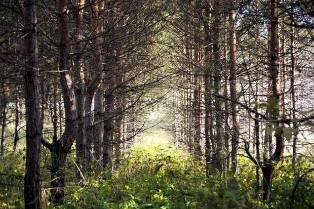 Mężczyzna zaginął w lesie w okolicach Wierzbowej