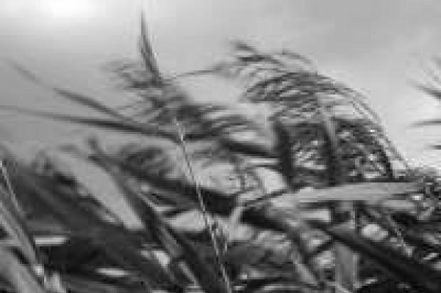 Porywy wiatru mogą osiągać 100 km/h