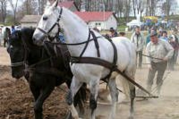 W Ocicach odbył się turniej orki konnej