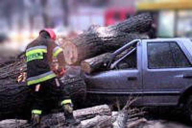 Drzewo spadło na samochód w centrum miasta