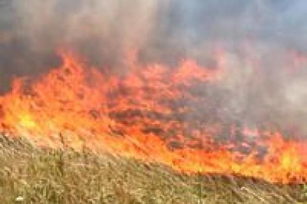 Od początku czerwca wybuchło 58 pożarów lasów