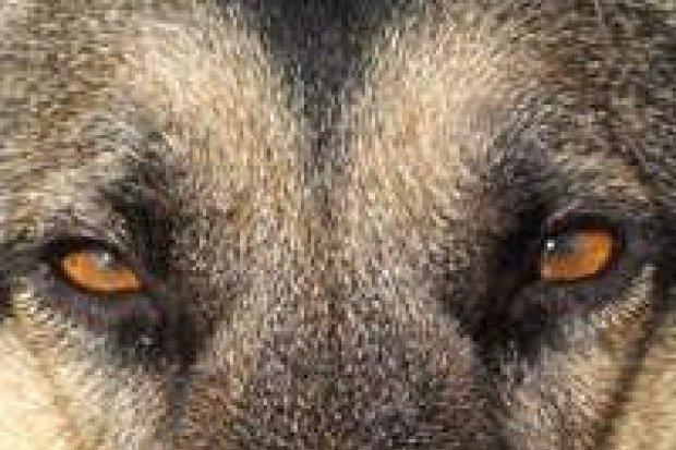 Problem z psami puszczanymi samopas