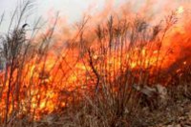 Plaga wypalania traw