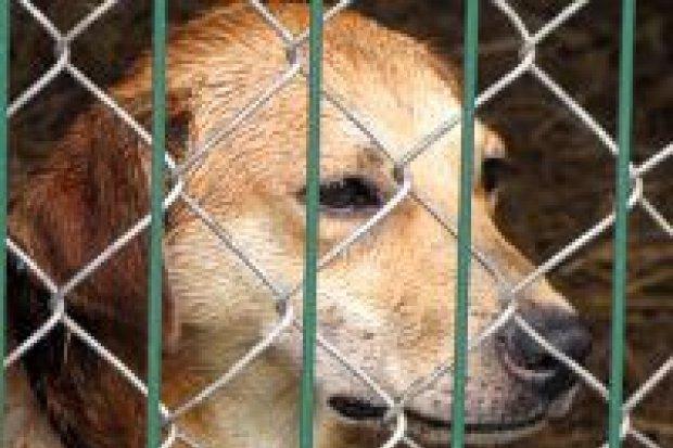 Co stanie się z psami z przechowalni w Zieleń-Planie?