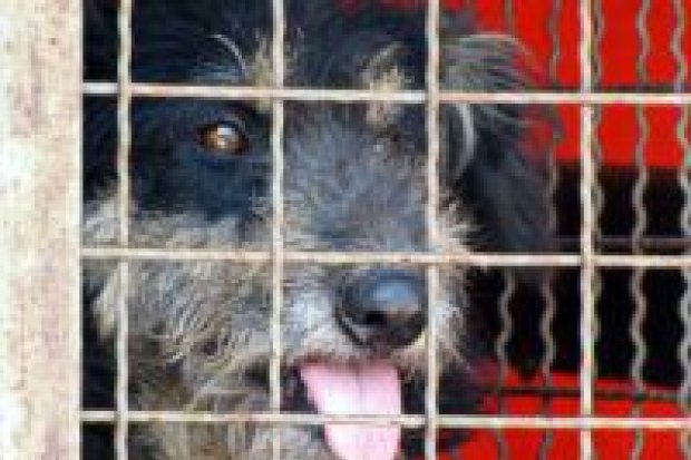 Część psów z Zieleń-Planu przewieziono do Jeleniej Góry
