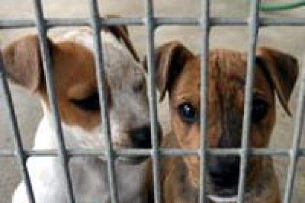 Nie handluj zwierzętami swymi