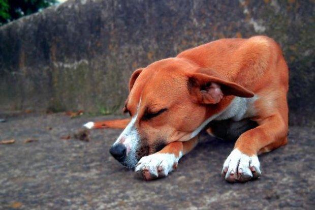Bezdomne psy z Gromadki trafią do schroniska