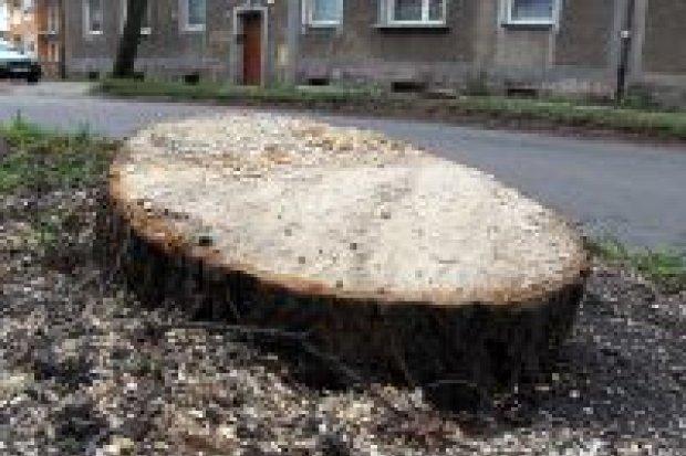 Wycinka drzew na ulicy Dolne Młyny