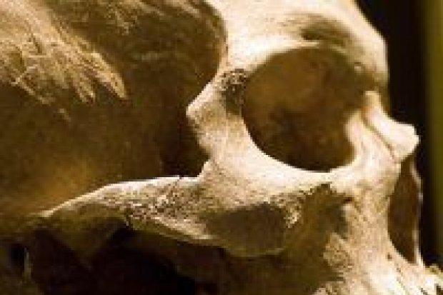 Znaleziono ludzką czaszkę
