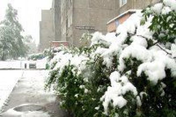 Majowy atak zimy