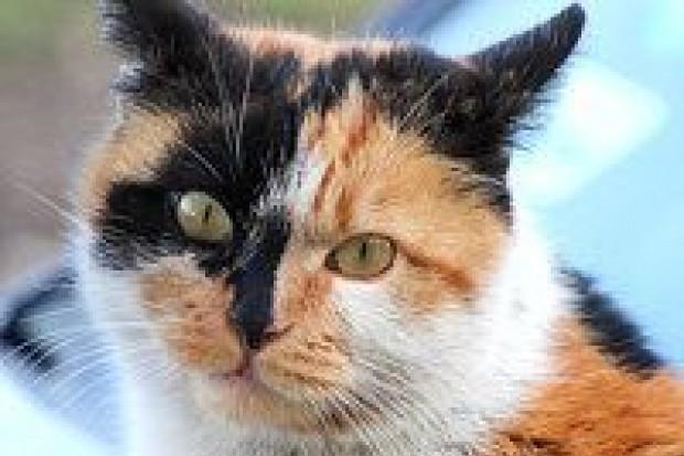 Pijany 65-latek zabił kota