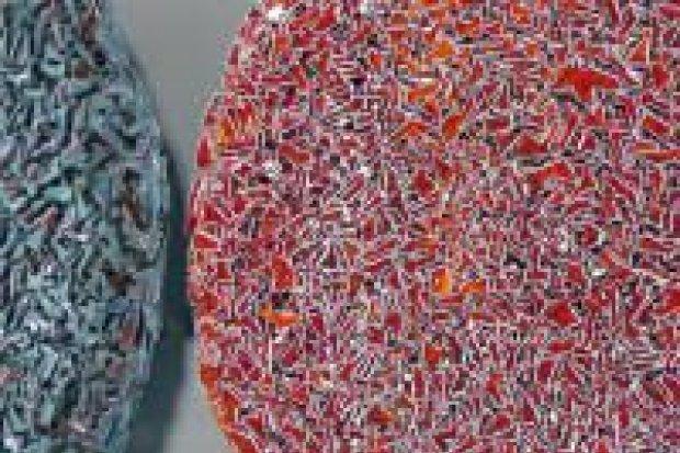 Wyjątkowa wystawa w Galerii BOK-MCC