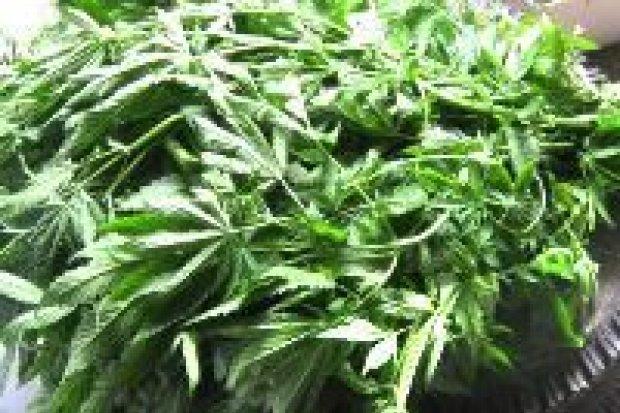Policjanci przechwycili ponad 6,5 kg marihuany