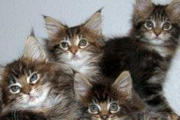 Będzie limit na psy i koty?