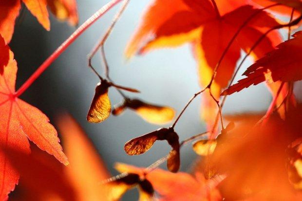Zmiana daty jesiennej zbiórki liści