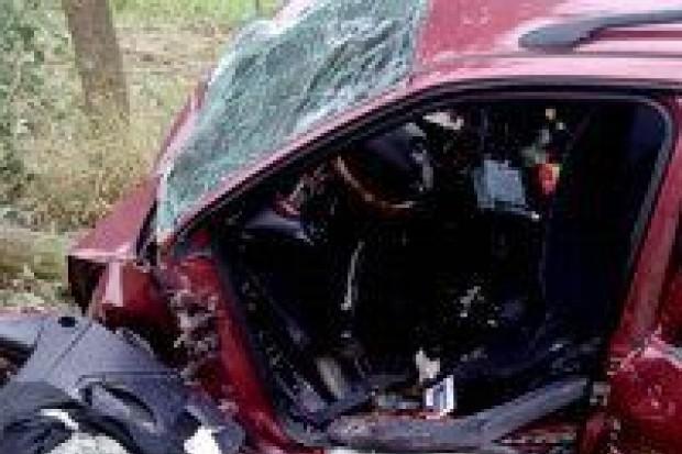 Pijany kierowca uderzył w drzewo, grozi mu do 2 lat więzienia