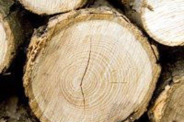 Kradli drewno z lasu, wpadli na gorącym uczynku
