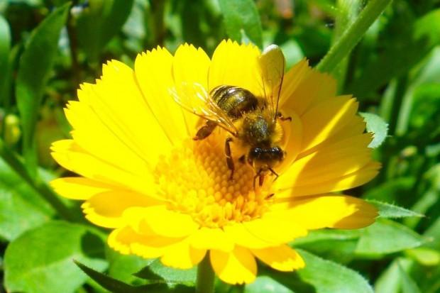 Nowy zarząd Koła Pszczelarzy w Rudnej