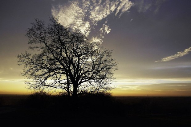 Zgłoś swoje ulubione drzewo do konkursu Drzewo Roku 2015