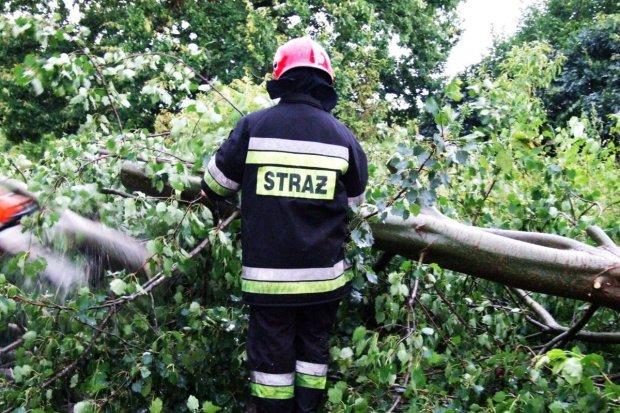 Burza i ulewa nad Nowogrodźcem. Strażacy usuwają z dróg konary drzew