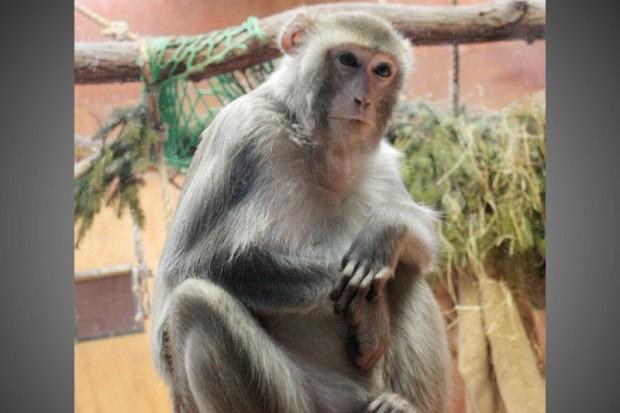 """Spotkaj się z """"krewnymi"""" w Naszym Zoo"""