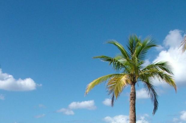 Przystanek Jamajka: walentynkowa impreza plenerowa