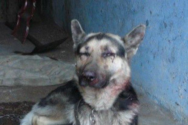 Nie było go stać na utrzymanie psa, więc próbował go zabić