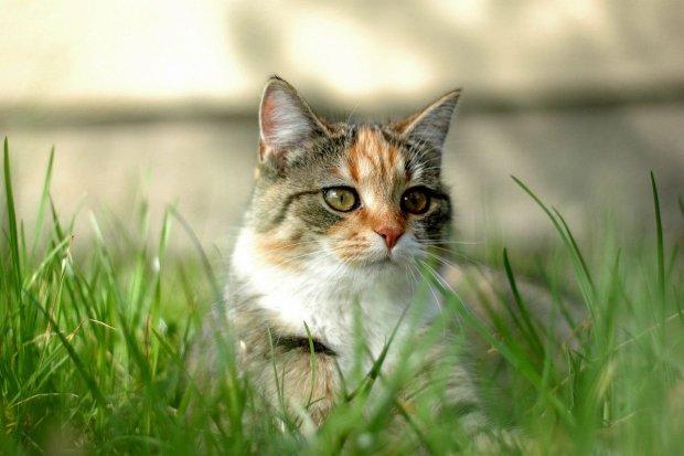 Poprawa bytowania wolno żyjących zwierząt