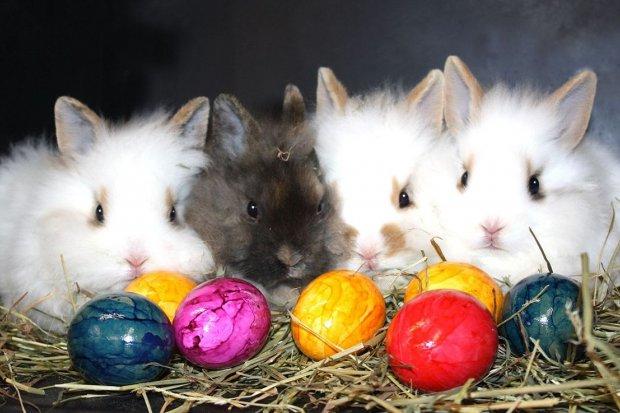"""Otwarcie """"Świata Królików"""" w Poniedziałek Wielkanocny"""