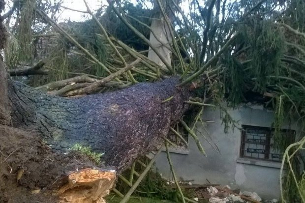 Strażacy: ok. 40 interwencji związanych z silnym wiatrem