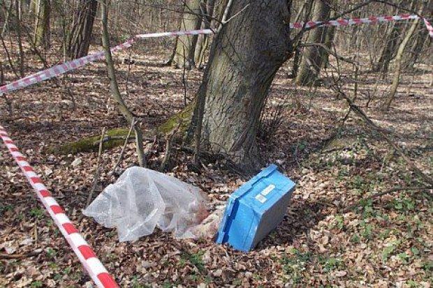 Zwłoki jelonka w pojemniku w lesie