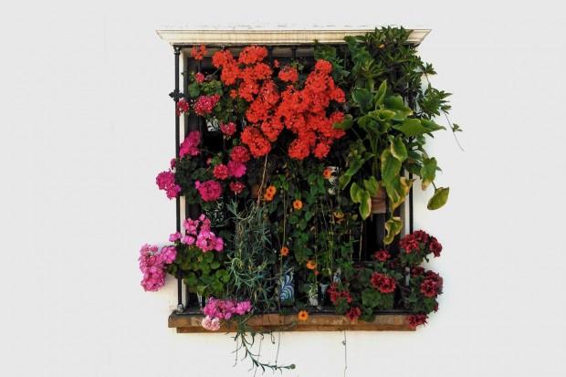 Bolesławiec w kwiatach – zgłoszenia do 15 maja