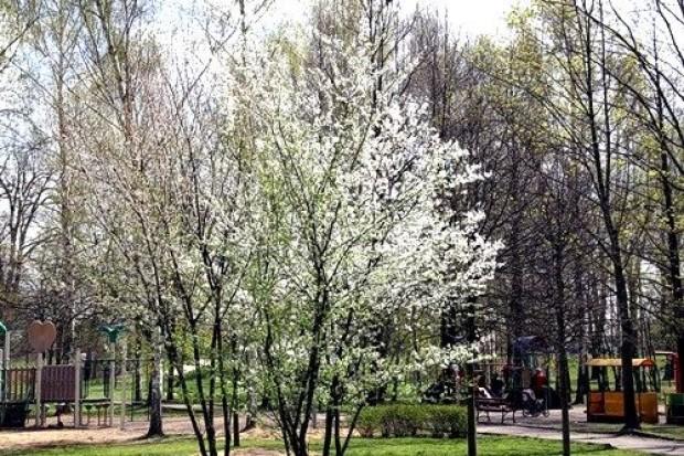 Park pięknieje na wiosnę