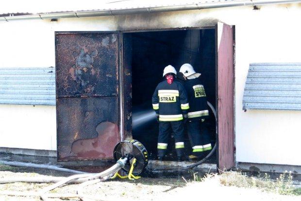 Spłonęła hala na fermie drobiu w Kraśniku Dolnym