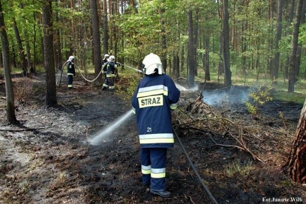 Pożar lasu w Leśnictwie Ziębina